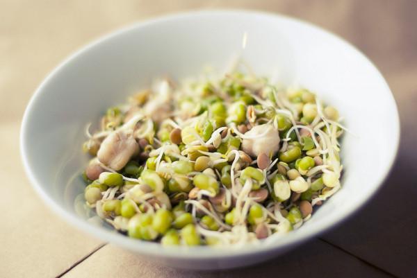 soybean-933026_1280